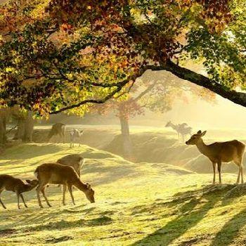 奈良の自然が広がるロケーション