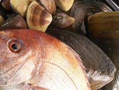 地元漁港で獲れた旬の魚