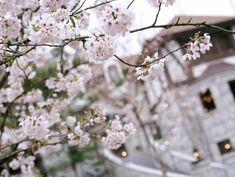 season 春
