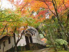 season 秋