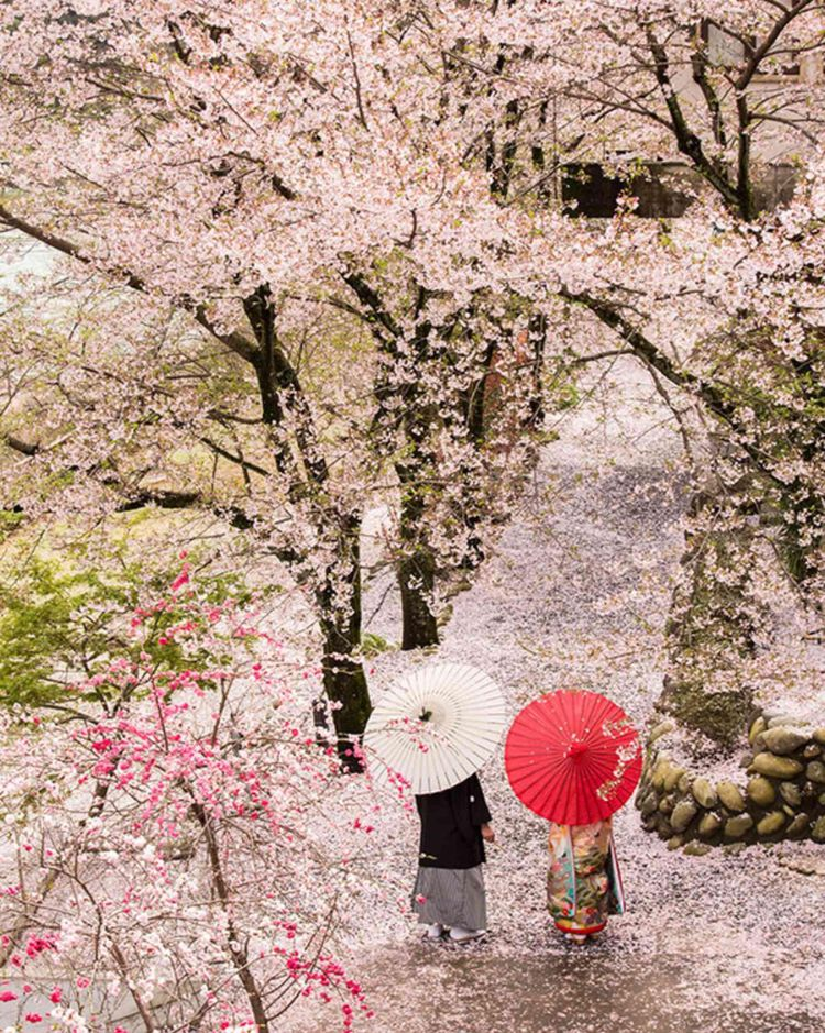 木曽川の自然を背景とする贅沢なロケーション
