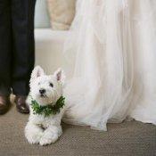 〇●愛犬との絶景ガーデンリゾート挙式●〇大切な家族と最幸の一日を